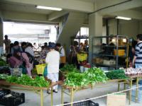 新鮮な野菜がたくさん