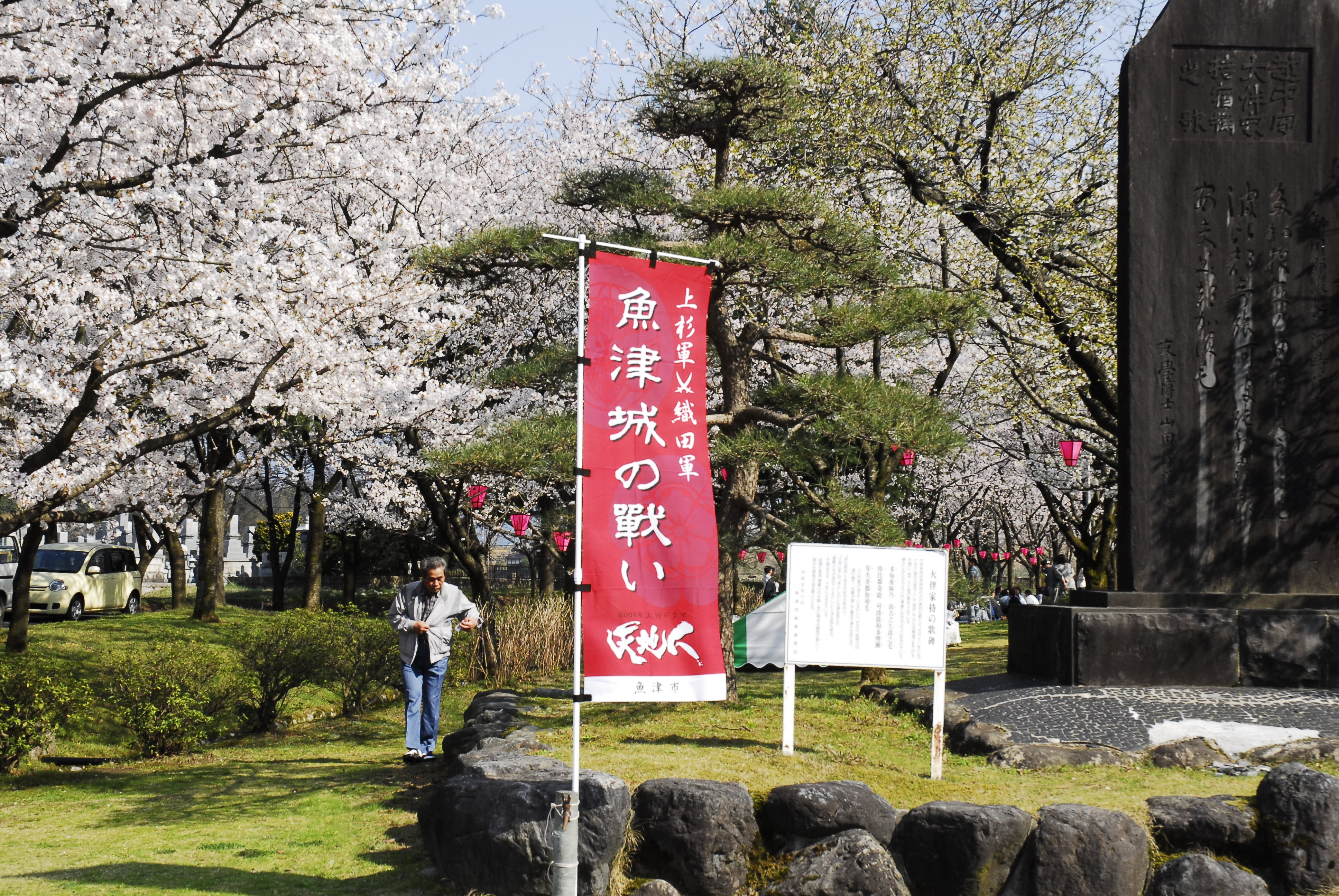 桜のぼり.JPG
