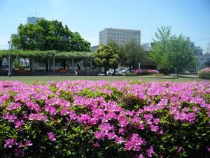 市役所前公園.jpg