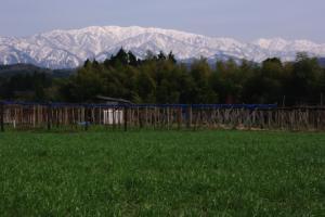 7・西布施・長引野・里山からの僧ヶ岳-1.jpg