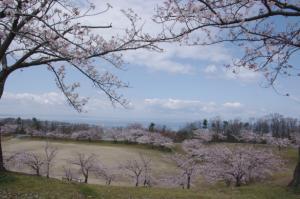 8・上野方・桃山・満開の桜越しに富山湾-1.jpg