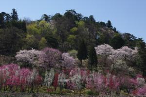 10・西布施・小川寺・天神山花の森ガーデン-1.jpg