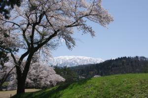 12・西布施・小川寺・国際カントリCの桜と僧ケ岳-1.jpg