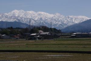17・天神・東尾崎・春の田園越しの立山連峰-1.jpg