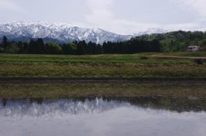 19・上野方・大海寺新・水田に映る立山連峰-1.jpg