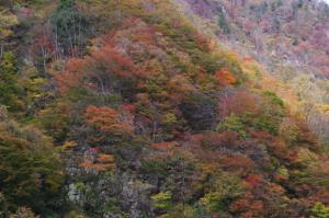30・片貝・片貝川渓谷の紅葉-1.jpg